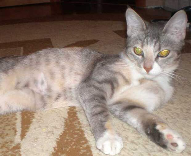Дуся - кошка, гуляющая сама по себе...