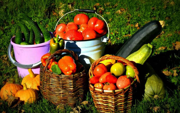 Родственница с юга поделилась биодобавкой, с помощью которой овощи растут как на дрожжах
