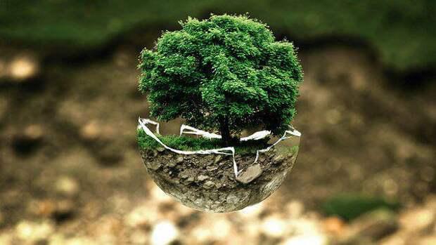 Дерево. Фото: pixabay.com