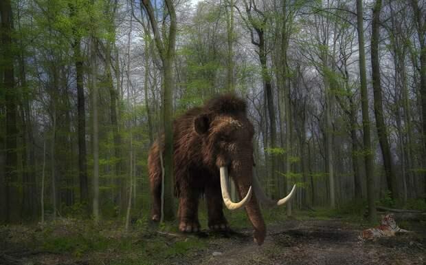 В США собрали 15 млн долларов на возрождение мамонтов