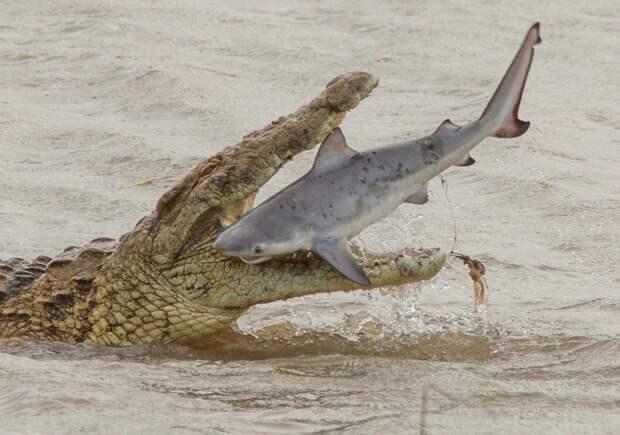 Разные ужасающие существа, которые обитают в Австралии