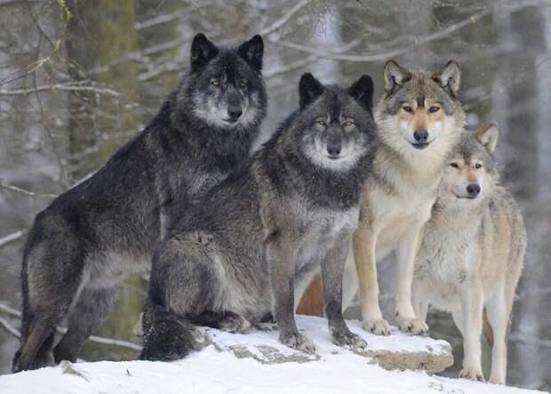 В чем состоит глобальная ошибка науки при изучении поведения животных