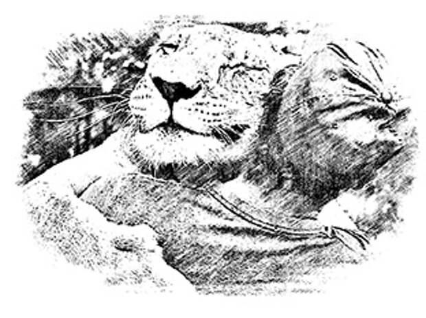 Сказка о том, как животные нашли своего человека