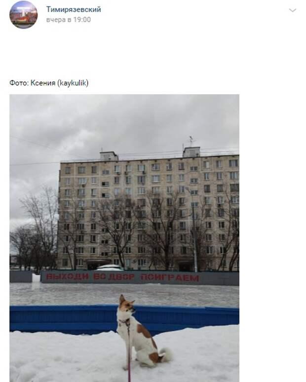 Фото дня: одинокий пес во дворах Тимирязевского