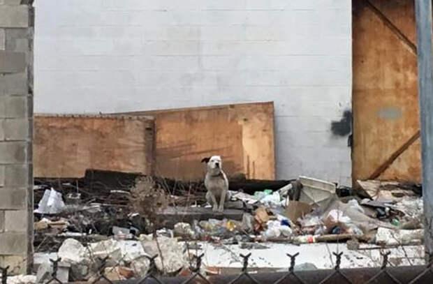 Собака ждала в разрушенном доме, что кто-то найдет ее
