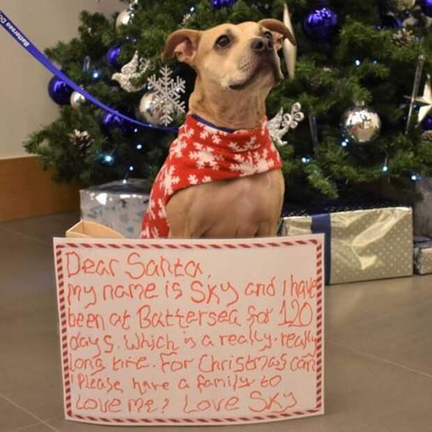 """""""Все, что я хочу на Рождество, – чтобы меня кто-нибудь полюбил!"""" Приютские собаки пишут письма Санте. Цепляет до слёз…"""