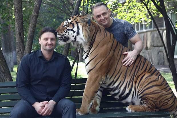 Сестру и племянника Запашных уволили из цирка за жестокое обращение с животными
