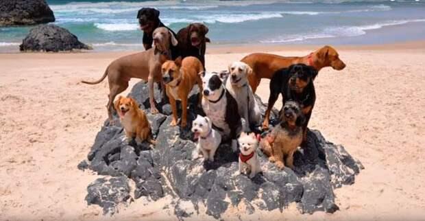 Мужчина привёз 12 собак и одного кота на пляж