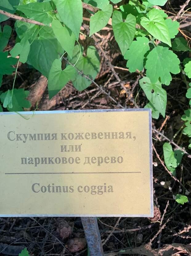Розарий Сокольников