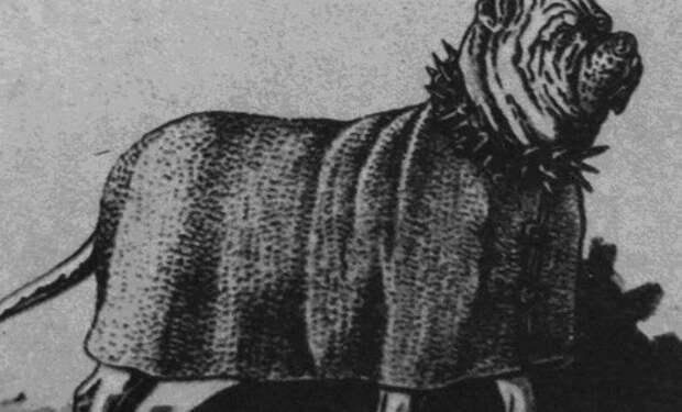 Бесерильо: собака конкистадоров, которую вывели для покорения Америки