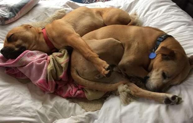 собаки спят рядом