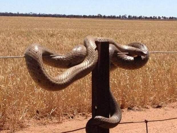 Австралия - страна-сказка! Только сказочка-то страшненькая австралия, опасности, странности, страшные сказки, удивительное рядом