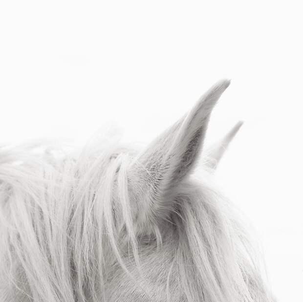 Белые лошади Камаргу.
