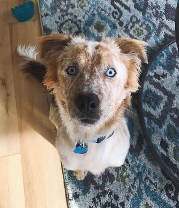 Преображение собаки, которую забрали из приюта