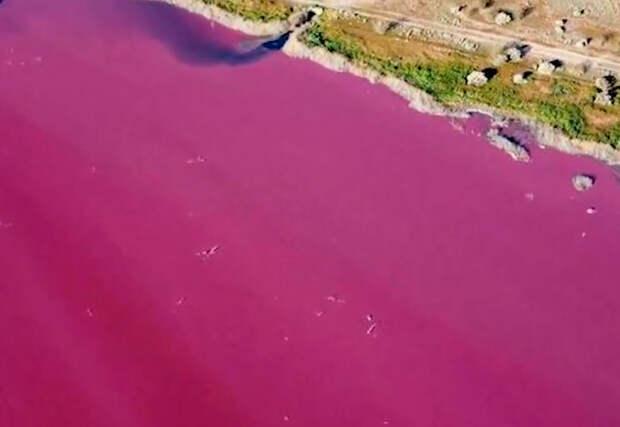 Лагуна в Аргентине стала ярко-розовой
