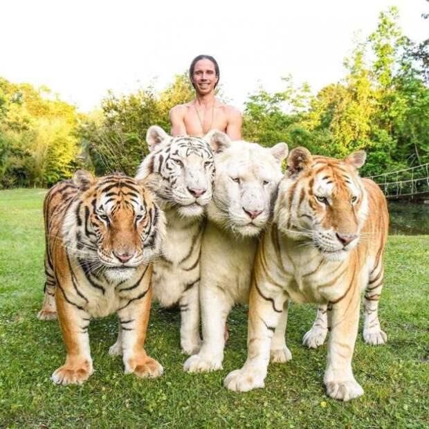 Мужчина спасает и воспитывает диких кошек — Тарзан наших дней