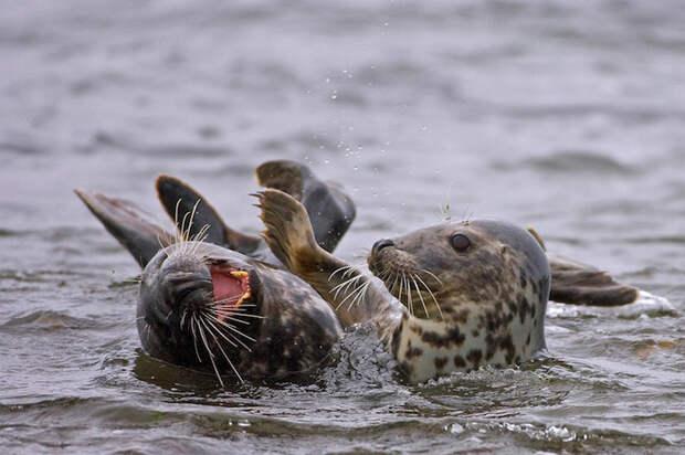 Конкурс млекопитающих