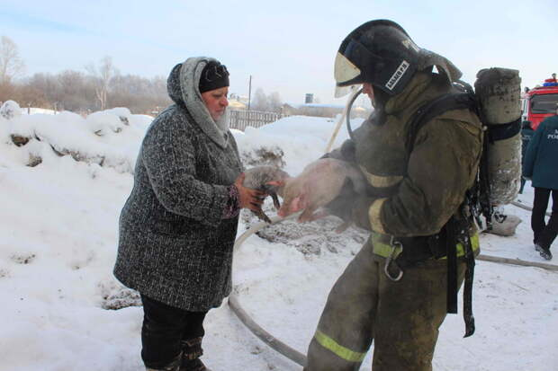Томские пожарные спасли 150 поросят из горящего свинарника  пожар, свиноферма, спасение