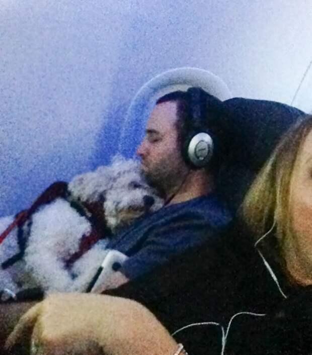 Куда хозяин, туда и пес животные, забавно, летайте самолетами, мило, пассажиры, самолет, собаки, хвостатые пассажиры
