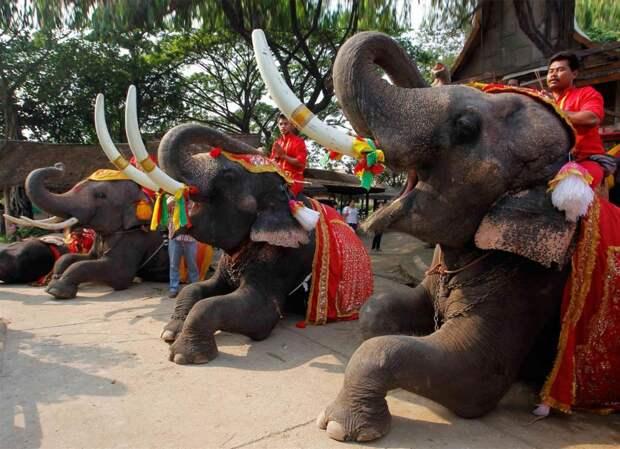 Слон – в хорошие руки