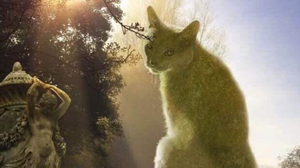 Сказочное место, где деревья и кусты превратились в котов…
