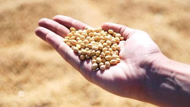 Отмену необходимости госрегистрации сои с ГМО могут продлить на 2022 год