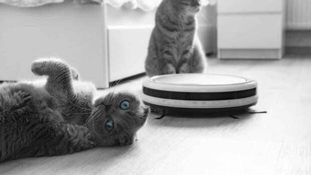 Как выбрать робот-пылесос для домашней уборки