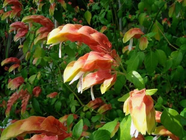 Лучшие комнатные растения с яркими прицветниками