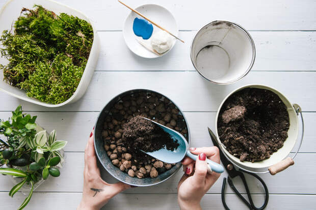 Как вырастить бонсай в домашних условиях
