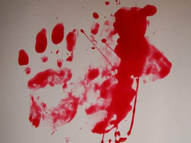 В Ленобласти женщина задушила мужа-москвича полиэтиленовым пакетом