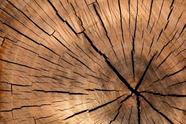 На Бутырской коммунальщики устранили рекламу с деревьев