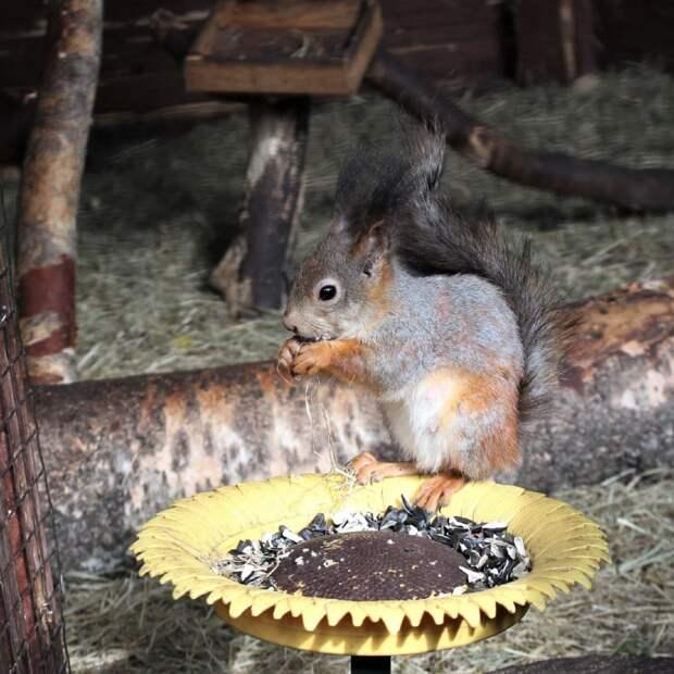 Фото дня: белка пообедала в парке в Лосинке