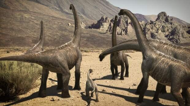 Древнейшее стадо динозавров обнаружили во время раскопок в Аргентине