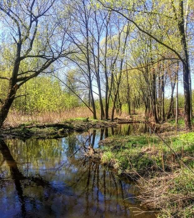 Фото дня: парк «У Джамгаровского пруда» зазеленел