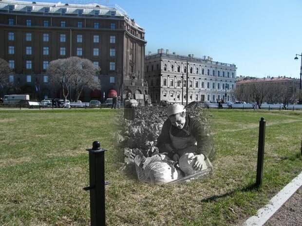 Ленинград 1942-2009 Исаакиевская площадь. Уборка капусты блокада, ленинград, победа