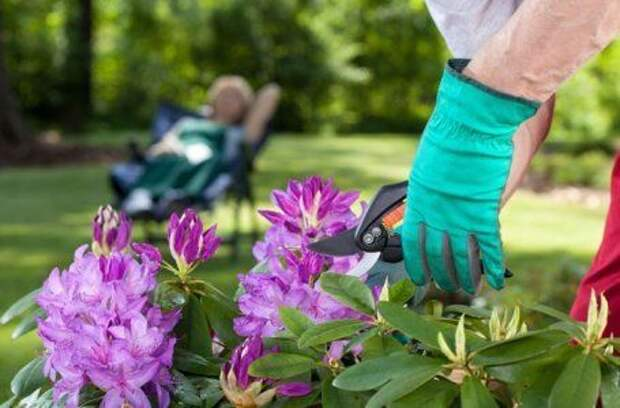 25 дел, которые нужно сделать в саду, огороде и цветнике в марте