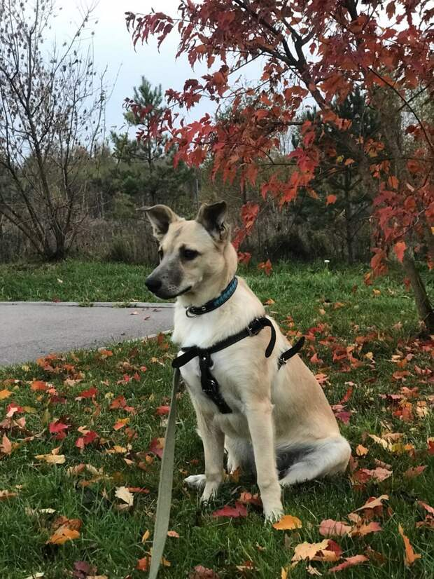 Миниатюрная собачка со сложным характером печально смотрела вокруг животные, история, питомец, приют, собака, фото