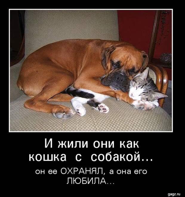 demotivator_prikol_gagz_ru_14458561