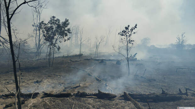 В Екатеринбурге выявили превышение вредных веществ из-за торфяных пожаров