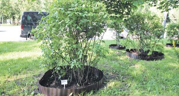 Цветы и деревья на Костромской защитили от повреждений