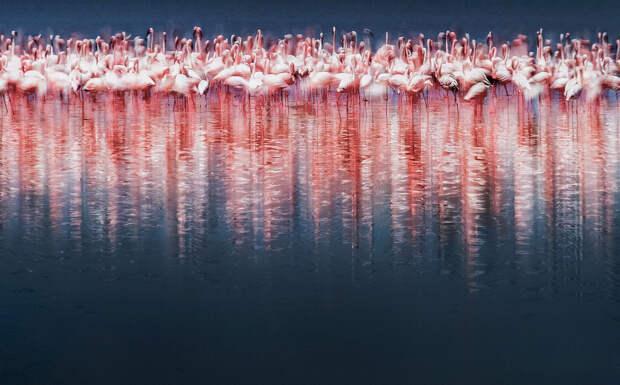 ФОТОЛИКБЕЗ. Фотоконкурс Siena International Photography Awards