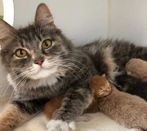 Котята с мамой