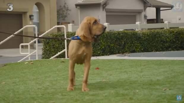 Видео: 7 самых труднообучаемых пород собак в мире