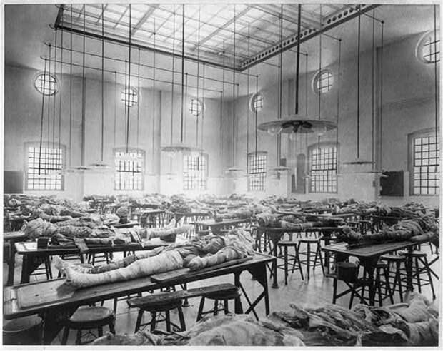 11. Анатомический театр (1902 г.) медицина прошлого, медицинская процедура, медицинские истории