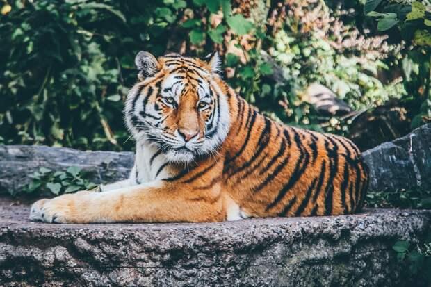 Устранение последствий ветра в Ижевске, туристические полеты в космос и нападение тигра в Хабаровском крае: новости к этому часу