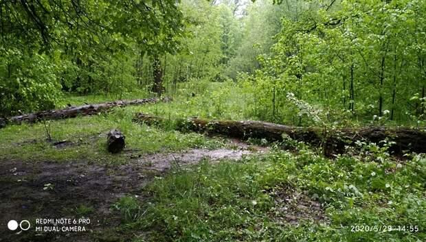 Рабочие устранили нарушения по уборке мусора с газона в Подольске