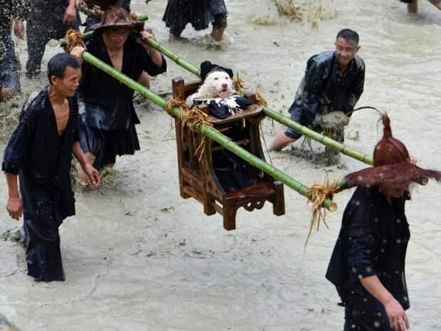 Чествование животные, жизнь, мир, роскошь, собака, удобство, фото