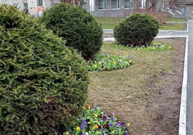 В клумбы Петрозаводска начали высаживать цветы