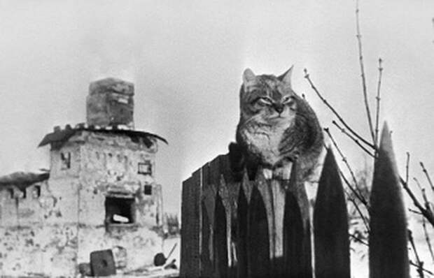 Как коты спасали много жизней в блокадном Ленинграде
