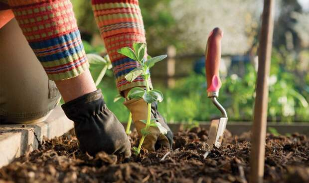 8 золотых правил садовода и огородника.